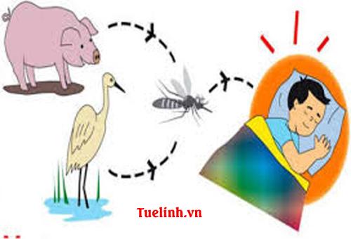 Bệnh viêm não Nhật Bản