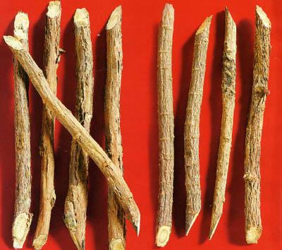070411 suckhoe camthao 10 bài thuốc giúp chữa trị bệnh sởi