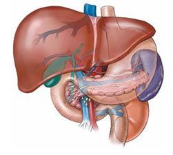 Triệu chứng nhận biết bệnh viêm gan siêu vi B