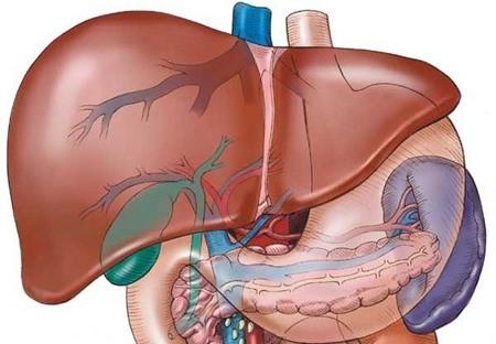 Các bệnh thường gặp ở gan