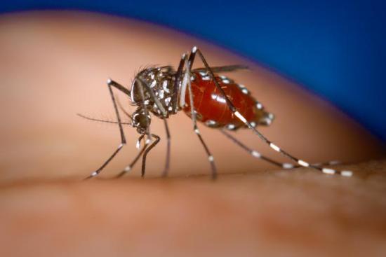 sot xuat huyet Sốt xuất huyết Dengue
